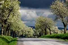 Jar na Myjavsku