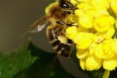 Včielka Jelka