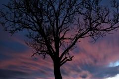 Mario night tree DSC_2132 foto tyzdna
