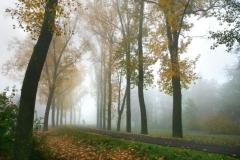 jesennou-alejou