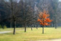 Pyšný strom